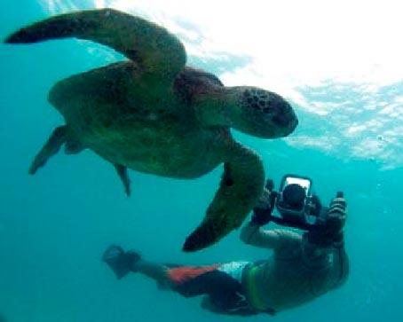 Isabel Island Galapagos